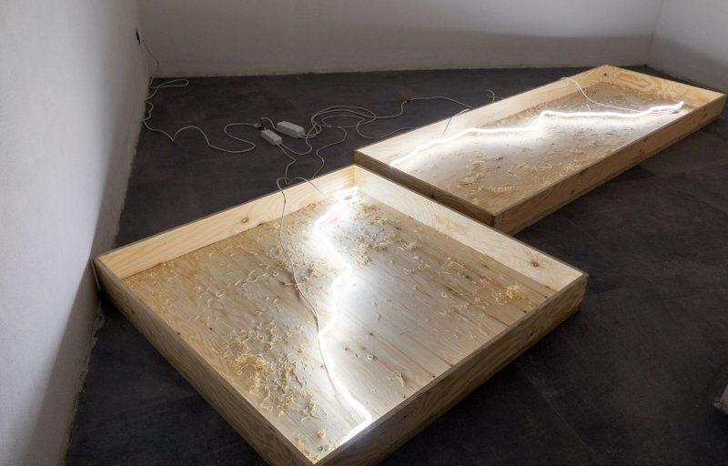 Shazar Gallery presenta Primitivo di Simone Cametti