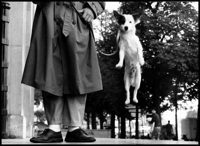 Elliott Erwitt - Dog Dogs