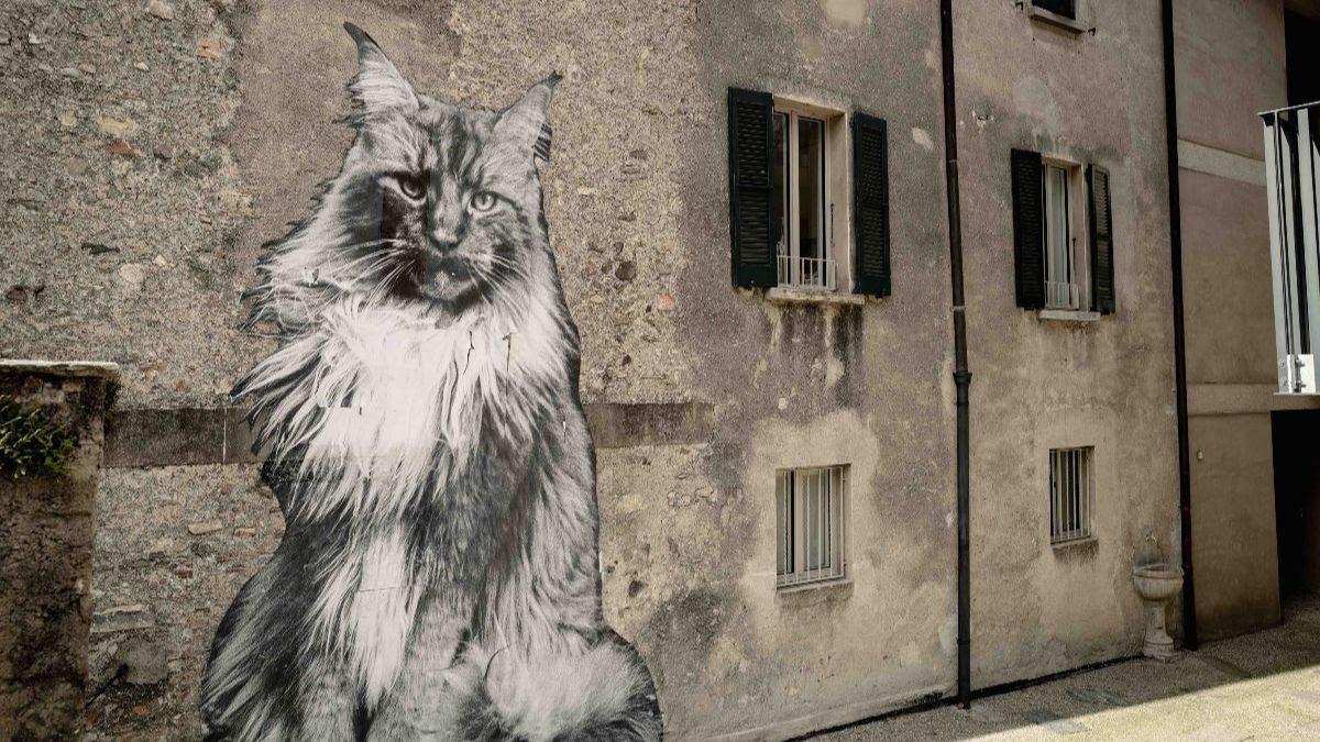 I Gatti di Rovio