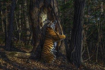 © Sergey Gorshkov, Wildlife Photographer of the Year 2020, The Embrace