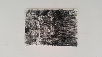 Ilaria Piccirillo, conigli albini, matita litografica su carta, 24x17