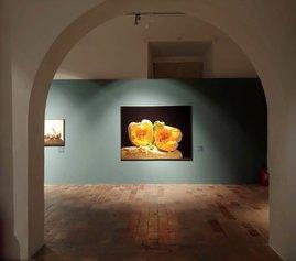 Luciano Ventrone. Il pittore dell'iperbole