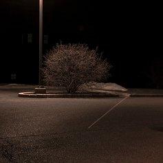 Night Bush - A wonderful parking lot composition, Courtesy the artist