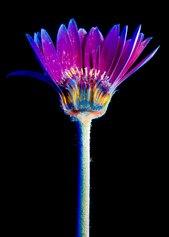 Ultra - Flowers