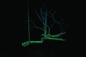 CIRCUS NATURAE-TRAPEZIO, tecnica mista, cm. 120x150